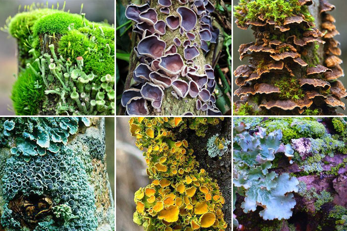 Image of textures from the natural world